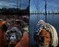 Climate Crimes 2012